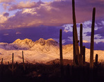 Alpenglow on spring snow on Four Peaks, Mazatzal mountains northeast of Phoenix, Arizona