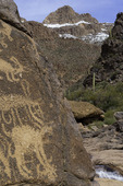 Petroglyphs of desert bighorn sheep survive on a wall above snowmelt, on the Hieroglyphics Trail, Superstition Mountains, Arizona