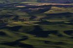 Steptoe Butte vista looking south in late afternoon, Palouse, Washington