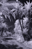 The Sierra de la Gigante looms over Playa Juncalito, Bahia Concepcion, Baja California Sur, Mexico