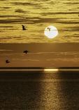 Sunrise and pelicans, Bahia San Luis Gonzaga, Baja California Norte, Mexico