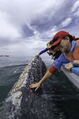 Touching the Gray whales, Scammon's Lagoon, Guerrero Negro, Baja California Sur, Mexico
