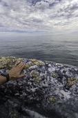 Touching the Gray whales, Scammon's Lagoon, Guerrero Negro, Baja California Sur, Mexico