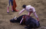 Coup de grace for the bull, end of the bullfight in Nogales, Sonora, Mexico