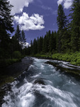 Summer flow of the Metolius River, central Oregon