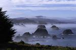 Sea stacks in morning fog, Mendocino, California