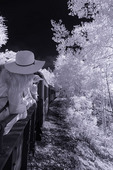 Julie rides the Cumbres & Toltec Scenic Railroad through the aspens, from Chama, New Mexico