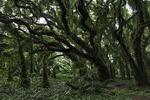 A forest glen, Maui, Hawaii