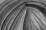Swirls in the sandstone, Coyote Buttes North, Vermillion Wilderness, Arizona