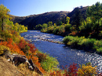 Fall colors along the Gunnison River, Colorado