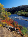 Fall colors along the Gunnison River,Colorado