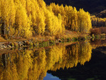 Fall Aspen trees with reflection in Crystal Lake, Uncompahgre National Forest, Colorado