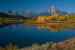 Still waters of the Snake River reflect Fall Aspens with Mount Moran 12605ft in the background, Grand Teton National Park, Wyoming