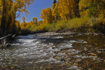 The East River and Fall Cottonwoods, Colorado