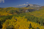 Marcellina Mountain and Fall Aspens, Gunnison National Forest, Colorado