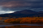 Evening light on Fall Aspens with storm clouds over the mountains, Colorado