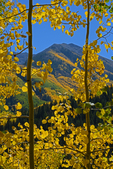 Fall Aspen leaves frame the view of a mountain, White River National Forest, Colorado