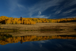 Morning light on Fall Aspen trees with reflection in a pond, Gunnison National Forest, Colorado