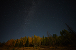 Fall Aspens and the night sky, Gunnison National Forest, Colorado.