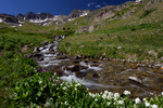 Stream in American Basin, Colorado