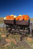 Pumpkin display, Colorado