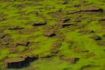 Algae and stones in Maroon Lake, Maroon Bells Scenic Area, Colorado