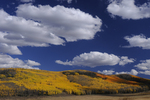 Fall Aspen colors and large clouds, Gunnison National Forest, Colorado