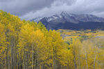 Fall Aspen trees with Wilson Peak [14,017 ft.], Uncompahgre National Forest, Colorado
