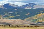 A single Bull Elk with a harem of females in the Fall rutting season, Colorado