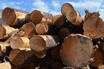 A wood pile of cut logs, Colorado