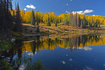 Fall Aspen trees with reflection in a pond, Gunnison National Forest, Colorado
