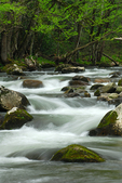 Spring along Middle Prong, Great Smoky Mountains National Park, Tennessee, USA