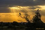 Crepuscular rays, Serengeti National Park; United Republic of Tanzania