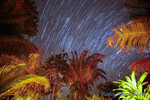 Star trail, or light left as the earth rotates at night, with jungle foliage, Inkanterra Amazonia on the Madre de Dios River in eastern Peru.