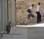 Domestic cat on the streets of San Gimignano, Tuscany, Italy
