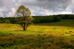 Tree in Big Meadows, Shenandoah National Park, USA