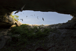 Stuart Bat Cave at Kickapoo Cavern State Park, Bracketville, Texas; Mexican free-tailed bats returning to the cave