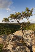 Arkansas; clouds; landscape; Petit Jean State Park; rock; Sky; spring; State Park; summer; Tree; USA