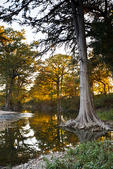 Guadalupe River and cypress trees at sunset, central Texas