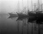 Texas, Matagorda County, Palacios, Harbor, shrimp boats in fog