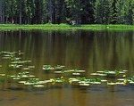 Colorado, Rocky Mountain National Park, Nymph Lake, water lilies