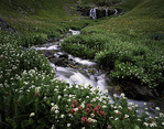 Colorado, San Juan Mountains, Wildflowers: Indian paintbrush and others at American Basin waterfall, BLM land