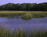 New Jersey, Gateway National Recreation Area, Sandy Hook, Salt marsh (view 2)