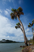 South Carolina, Hunting Island State Park, palm trees on lagoon