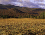 New York, Adirondack Park, High Peaks Wilderness field in fall color at first light