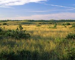 New York, Fire Island National Seashore, Long Island, Stabilized beach dunes and marsh grasses