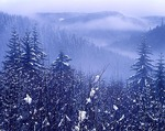 Oregon, Tillamook State Forest, Coast Range forest with fresh snow