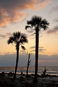 South Carolina, Hunting Island State Park, sunrise on beach with trees, beach erosion
