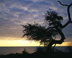 Texas, Aransas National Wildlife Refuge, Live oak on San Antonio Bay at sunrise, (view 2)