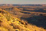 Texas, Big Bend Ranch State Park, Bofecillos Mountains, ocotillos, grasses